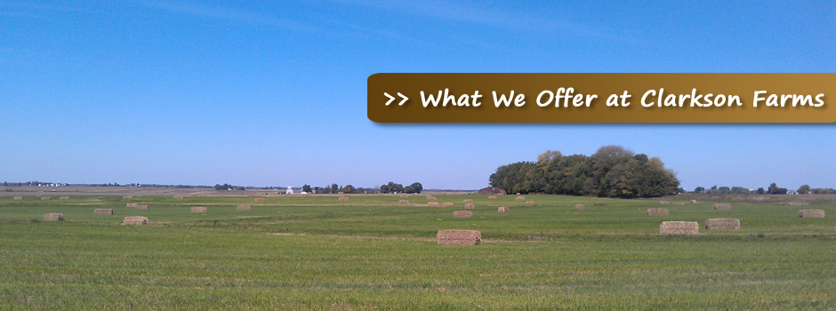 What-We-Offer-at-Clarkson-Farms