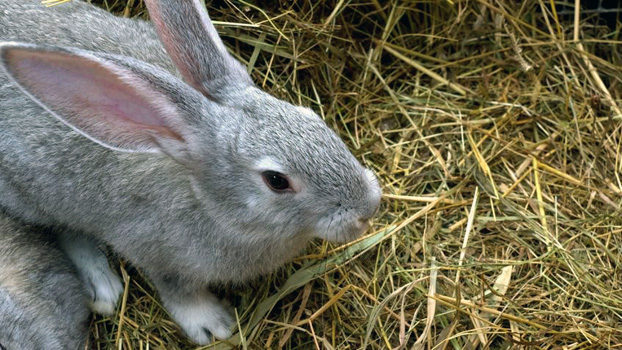 hay-for-bunnies